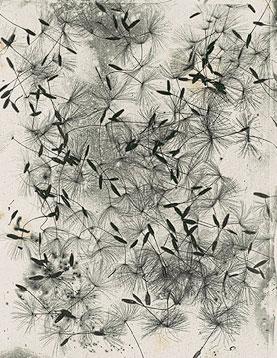 Talbot photo, Dandelion seeds