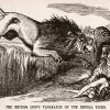Punch cartoon, British Lion