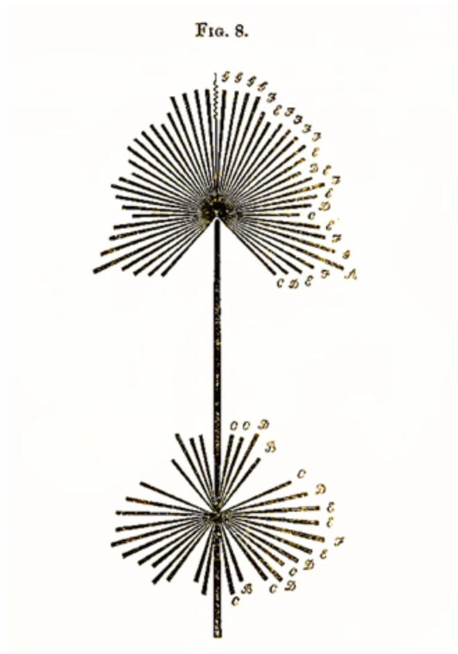 """Figure 3. Dresser, motif """"translating"""" """"God Save the Queen"""" into visual form. Dresser specifies that """"For the sake of effect, the first portion of the tune occurs in the lower half of the figure"""" (48). From _The Art of Decorative Design_. Courtesy of the Department of Special Collections, Stanford University Libraries."""